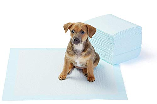 AmazonBasics Pet Training